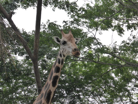 Singapore zoo16