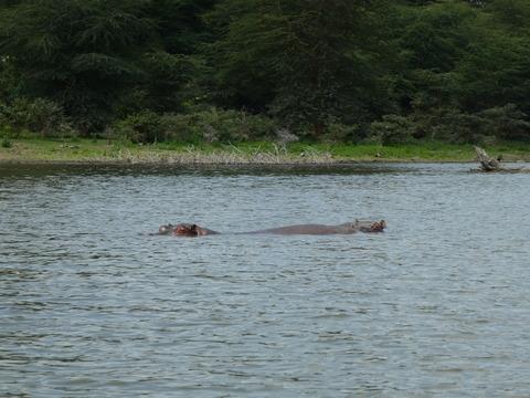 ナイバシャ湖 (61)
