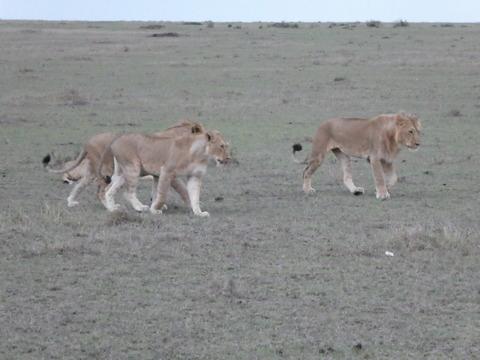 マサイマラ国立保護区 (22)