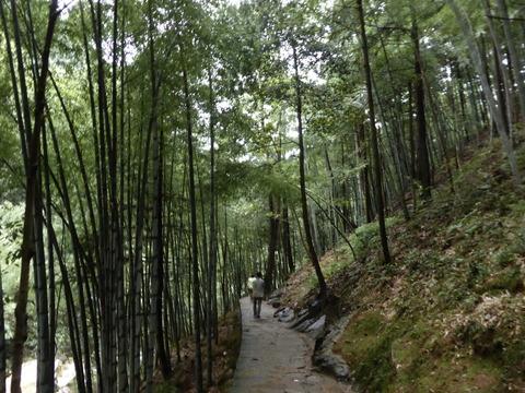 九龍滝 19
