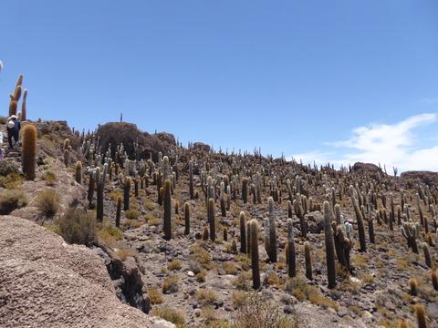 インカ・ワシ島4