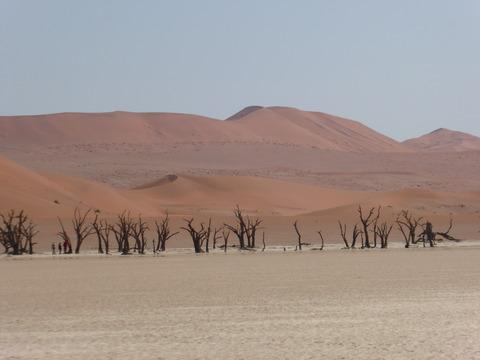 ナミブ砂漠20