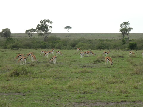 マサイマラ国立保護区 (100)