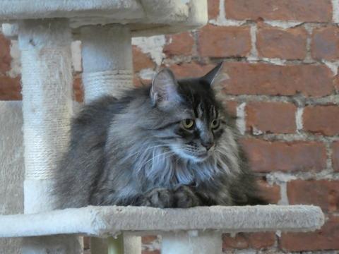 猫カフェ (15)