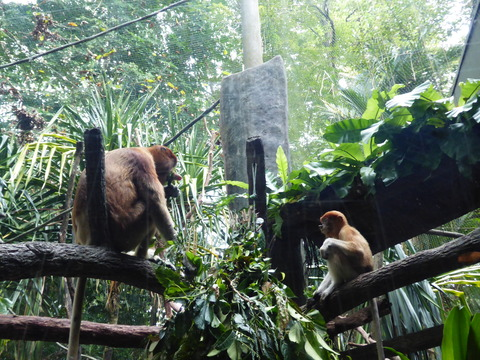 Singapore zoo17