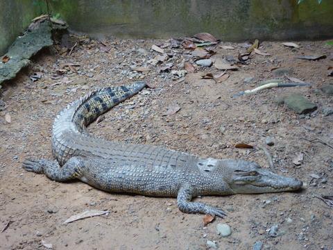 ②Lok Kawi Wild Life Park17