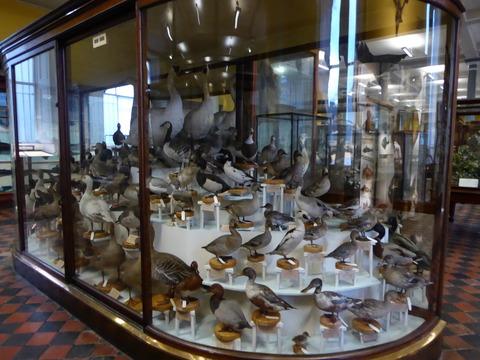 National Museum Natural Hostory (17)