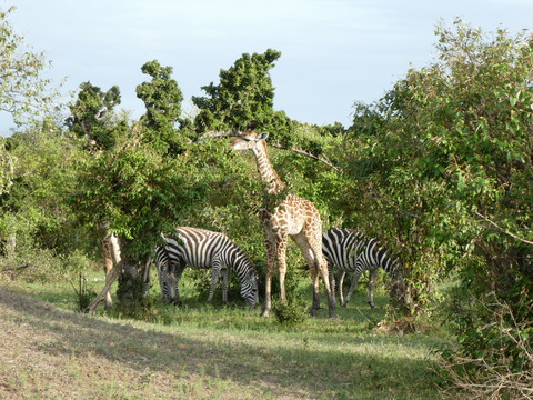 マサイマラ国立保護区 (147)
