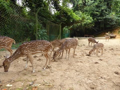 ②Lok Kawi Wild Life Park7
