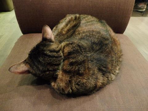 猫カフェ 極簡 (4)