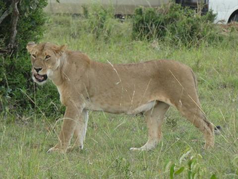 マサイマラ国立保護区 (50)