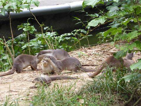 ②Lok Kawi Wild Life Park39