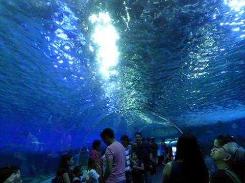 Ocean park3