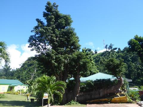 植物園 (27)