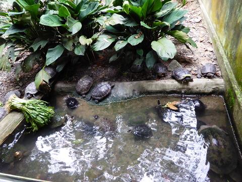 ②Lok Kawi Wild Life Park18
