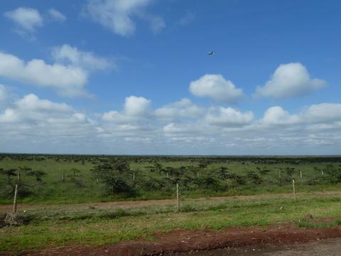 ナイロビ国立公園 (1)