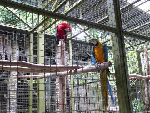 ②Lok Kawi Wild Life Park2