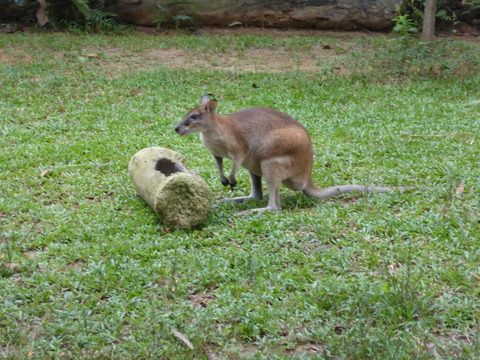 Singapore zoo4