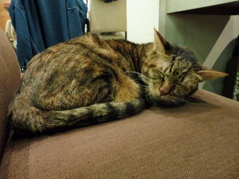 猫カフェ 極簡 (6)