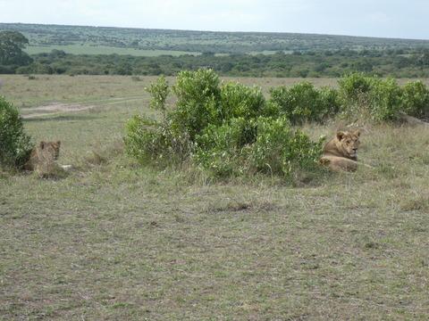 マサイマラ国立保護区 (6)