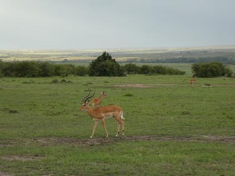 マサイマラ国立保護区 (76)