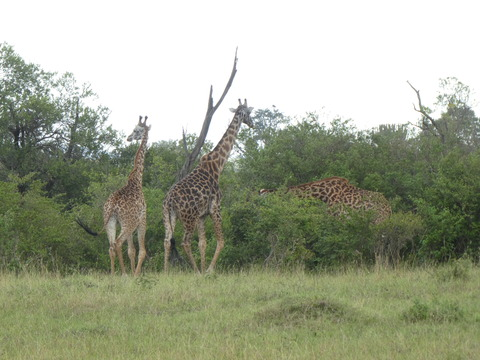 マサイマラ国立保護区 (48)
