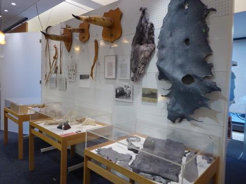 ペニス博物館 2