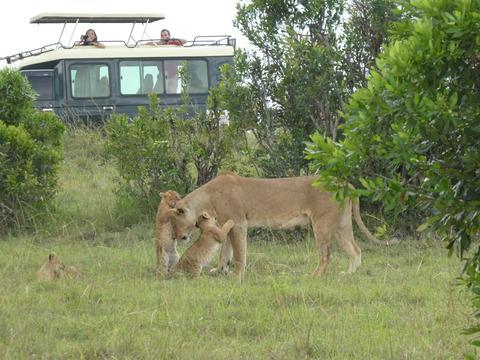 マサイマラ国立保護区 (53)