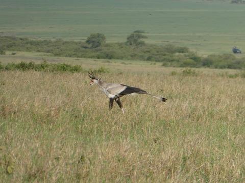 マサイマラ国立保護区 (94)