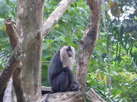 Singapore zoo7