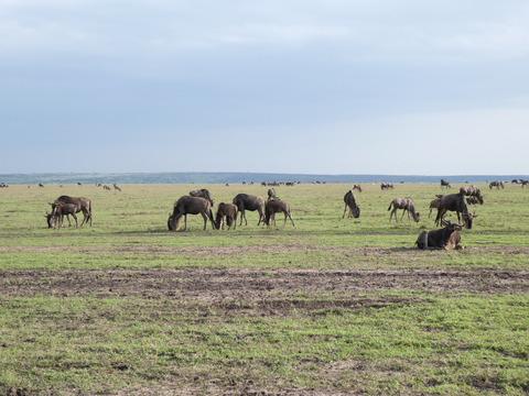 マサイマラ国立保護区 (153)