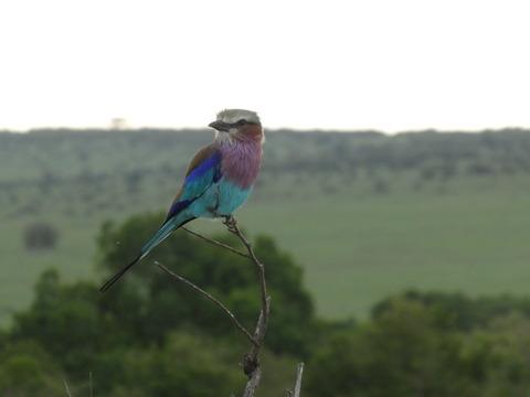マサイマラ国立保護区 (97)