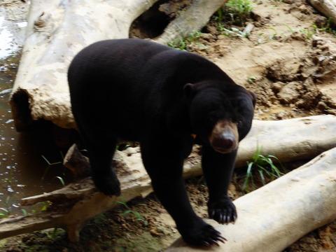 ②Lok Kawi Wild Life Park20