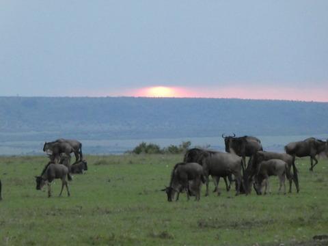 マサイマラ国立保護区 (9)