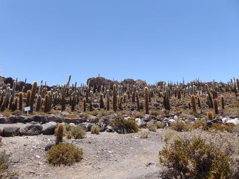 インカ・ワシ島2