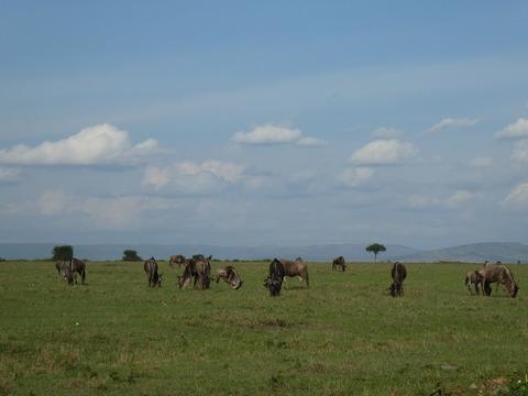 マサイマラ国立保護区 (66)