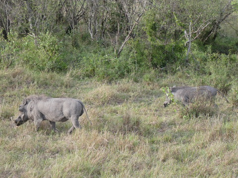 マサイマラ国立保護区 (118)