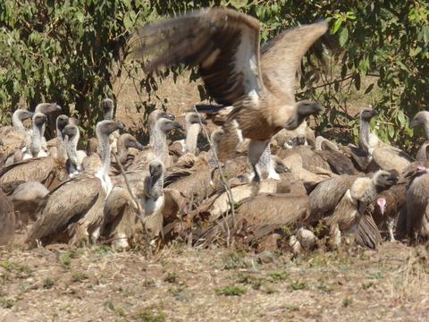 鳥の大群2