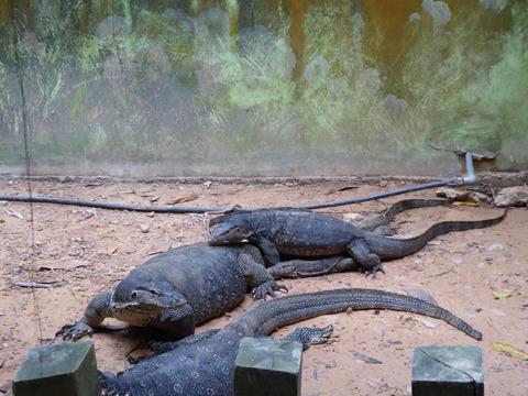 ②Lok Kawi Wild Life Park15