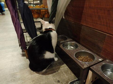 猫カフェ 極簡 (11)