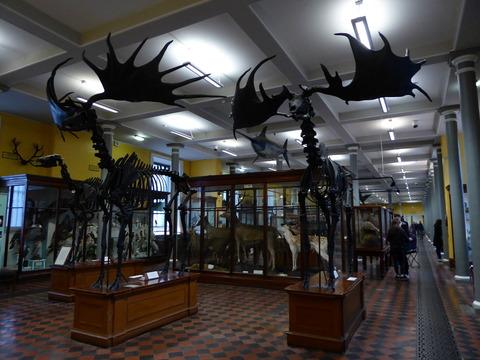 National Museum Natural Hostory (5)