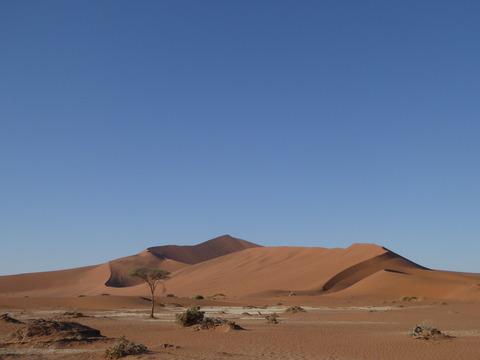 ナミブ砂漠 11