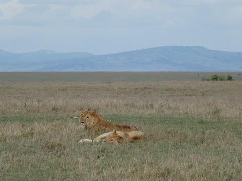 マサイマラ国立保護区 (18)