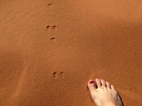 ナミブ砂漠 5