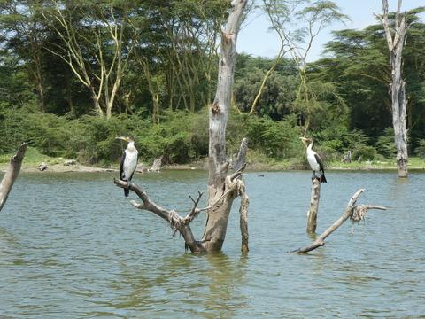 ナイバシャ湖 (26)
