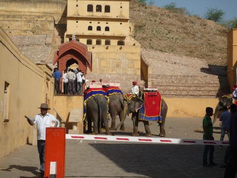 象さんたち