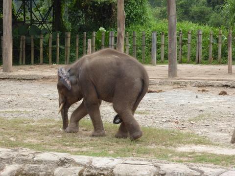 ②Lok Kawi Wild Life Park9
