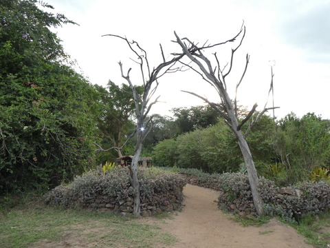 Fig Tree Camp (1)