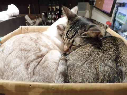 猫カフェ 極簡 (7)