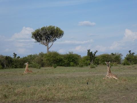 マサイマラ国立保護区 (38)